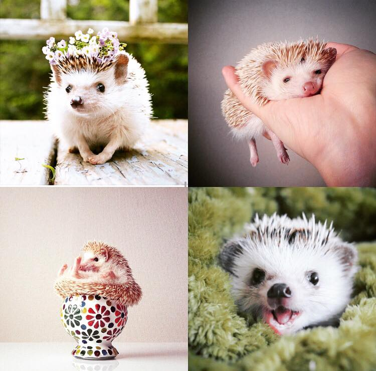 Pets of World of Mystic Falls